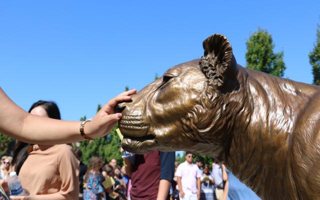 touch Widener lion pride statue for good luck