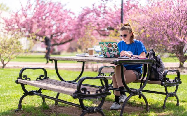 Student Studying by Cherry Blossoms